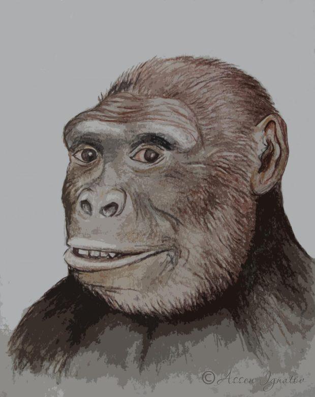 Рисунка на грекопитек. Учените предполагат, че това може да е най-старият хоминид, откриван някога