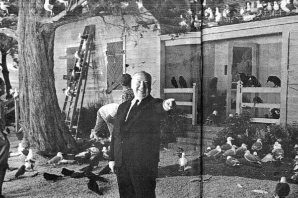 Птиците във филма на Хичкок изглеждат доста по страшни от тези на снимката