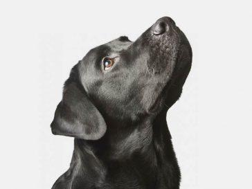 Как да разбереш, какво се опитва да каже кучето ти