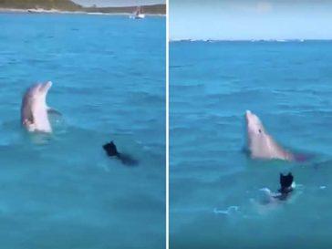 Виж този невероятен момент, в който куче и делфин си играят заедно в океана