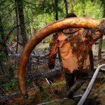 Фотограф заснема руски ловци на останки от мамути