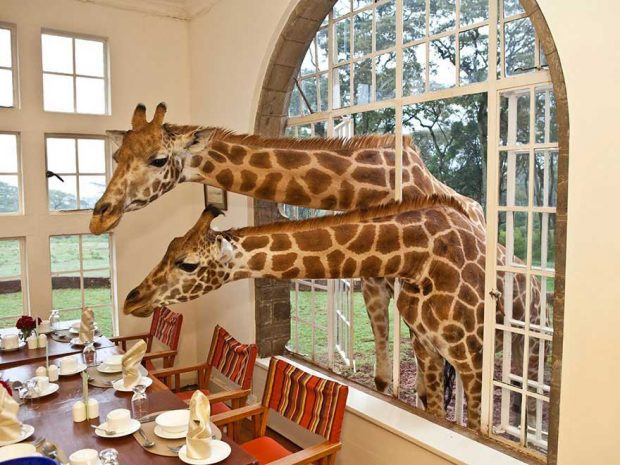 Giraffe Manor, Кения