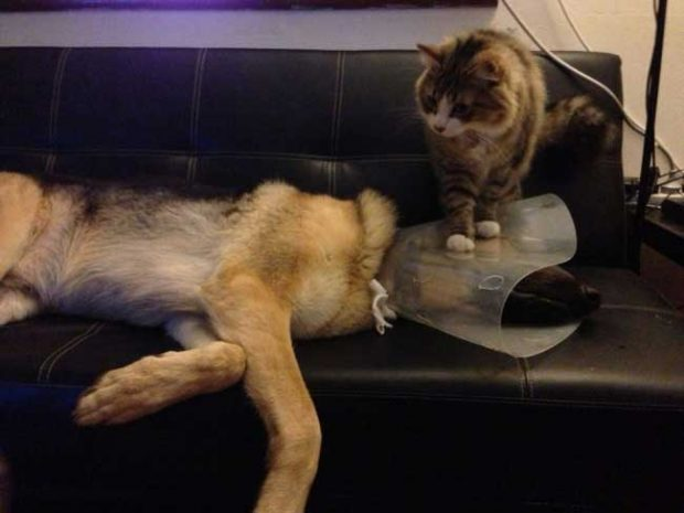 Предпазната яка може да е изглеждала като добра идея при ветеринаря, но вкъщи нещата стоят по различен начин