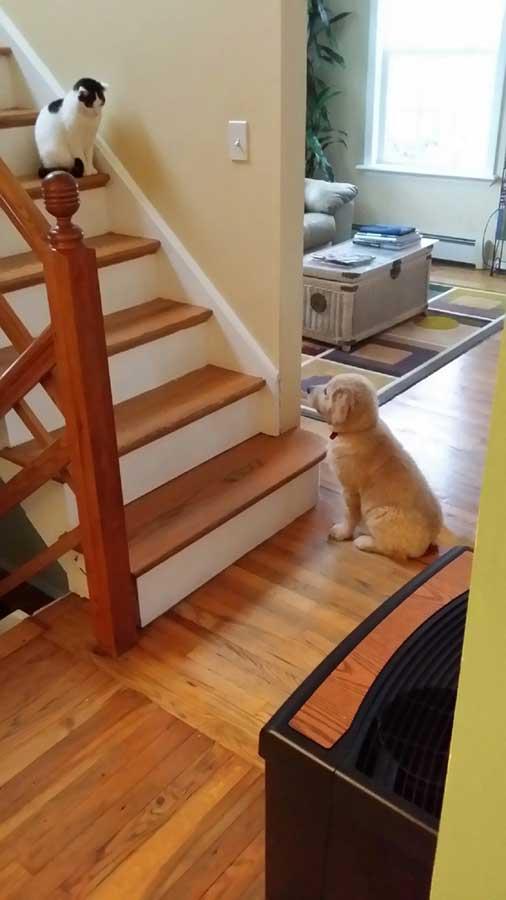 """""""Купихме си кученце. Котката ни не е особено щастлива от този факт"""""""