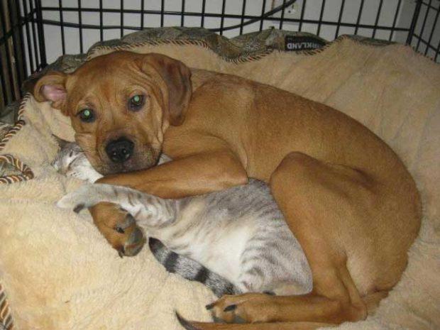 """""""Кучето ни си има домашен любимец"""""""