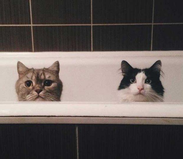 """""""Всеки път, когато отида до тоалетна, виждам това"""""""
