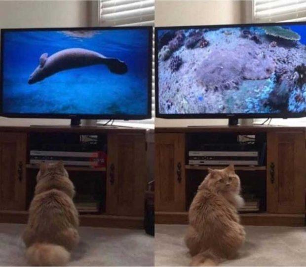 """""""Котката ми просто обожава да гледа научнопопулярни филми за природата. И всеки път периодично се обръща, за да провери дали и аз гледам"""""""