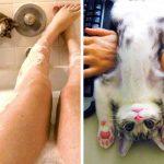 18 смешни котки, които искат всичко за себе си