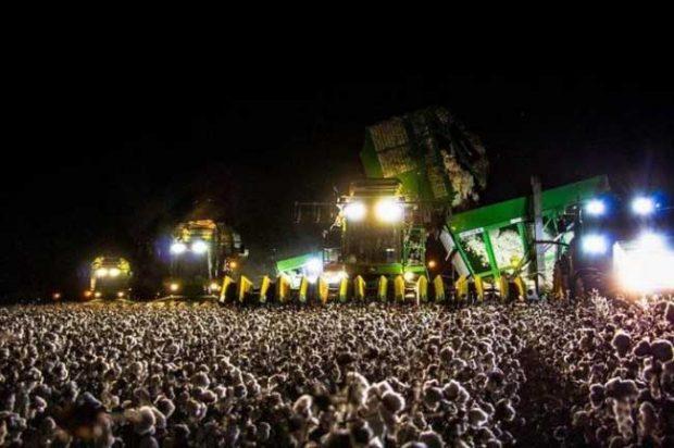 Тази памукова плантация изглежда точно като хора по време на голям концерт