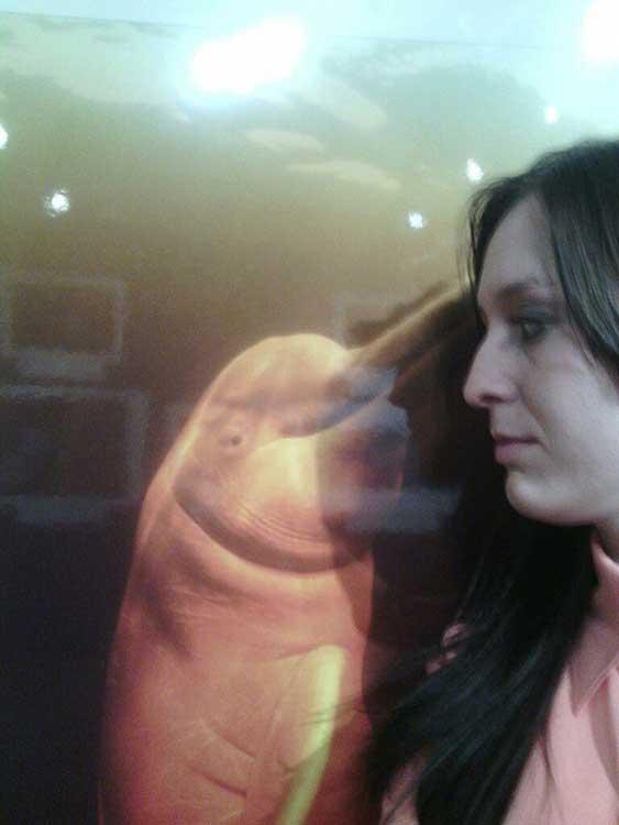 Не. Човек и делфин не могат да бъдат двойка