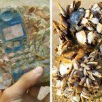 Хора споделят в интернет снимки на намерени вещи, които ще накарат всеки да позеленее от яд
