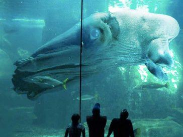 11 изключително редки животни, за които не знаеш, че съществуват