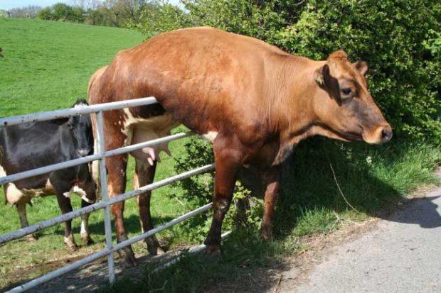 Хората казват, че тревата винаги изгелжда по-зелена от другата страна на оградата