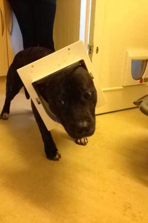 """""""Извинявай, ти котка ли си? Защо съм почти сигурен, че това тук е котешка врата..."""""""