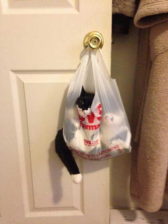 Знаеше ли, че продават котки в аптеката?
