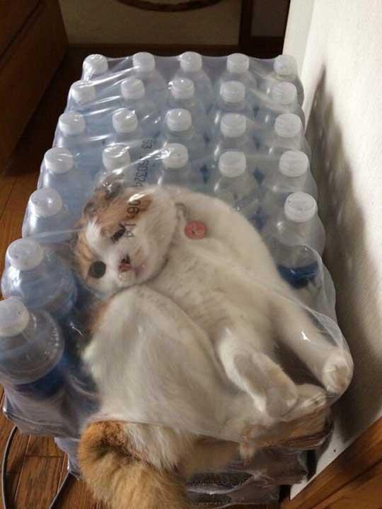 Котката, която може да се промуши навсякъде и после да съжалява