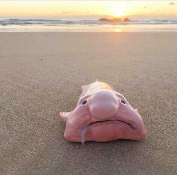 Ако съдим от начина, по който изглежда, тази риба сигурно не обича много да се снима