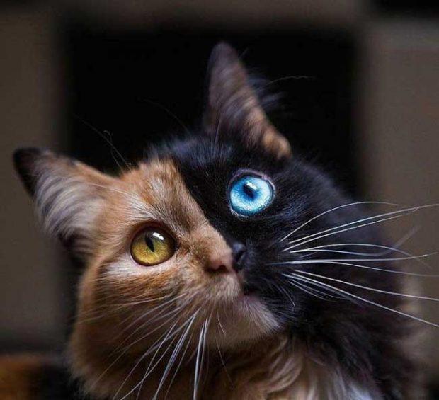 А ето и микс от черна и червена котка