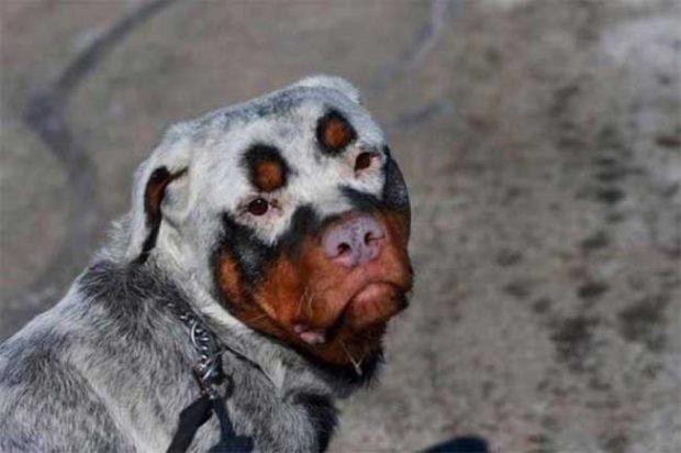 Куче с красива и рядко срещана украска