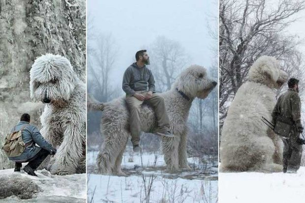 На кого му е нужен кон, когато просто може да направи колаж на Фотошоп с кучто си?