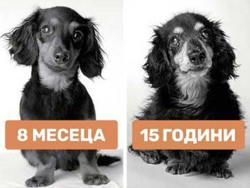 Как остаряват кучетата: затрогвщи снимки на най-добрия приятел на човека