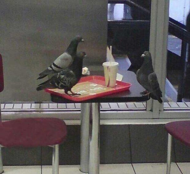 Единият от гълъбите изглежда така, сякаш е на интервю за работа