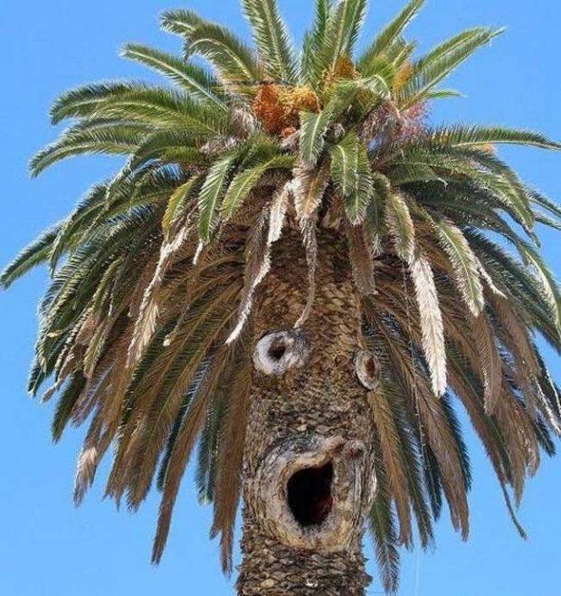 Какво ли е видяла тази палма?
