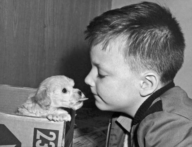 Обичали са животните и са се държали с тях като с приятели