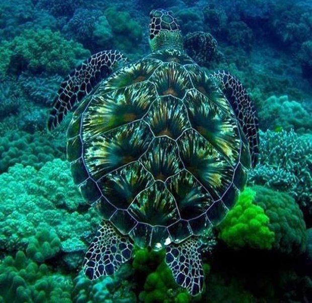 Тази костенурка спокойно може да бъде призната за произведение на изкуството