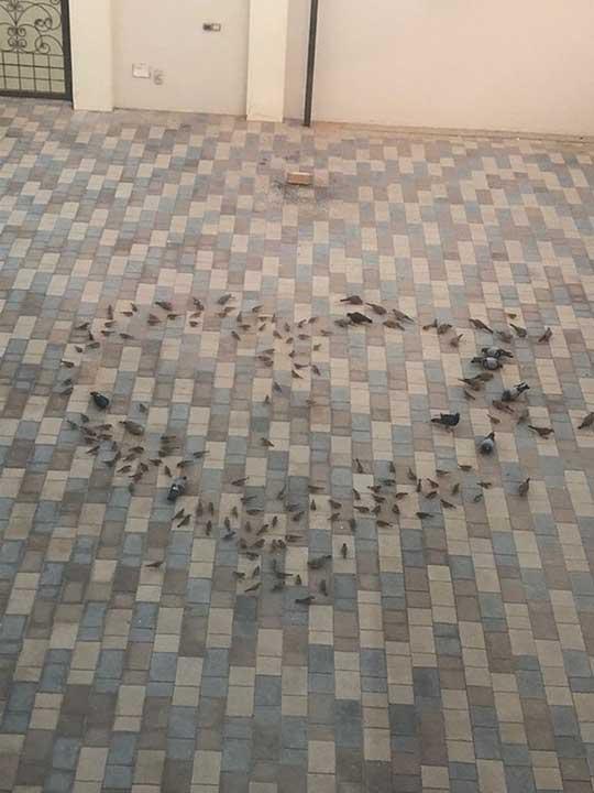 """""""Баща ми разпръсна в двора храна за птици под формата на сърце, за да изненада мама, когато се събуди"""""""