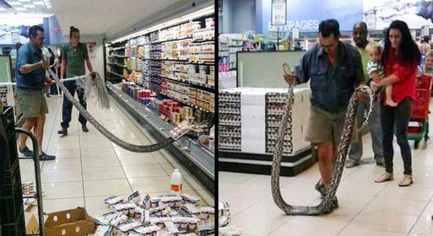 Този мъж е намерил 4-метрова змия в хладилника на супермаркет в Йоханесбург, Южна Африка