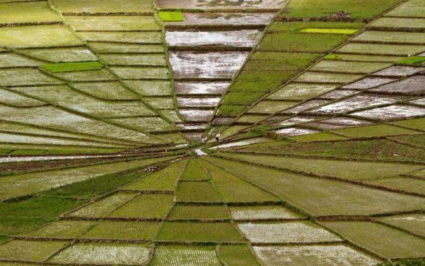 Ако не беше човекът, застанал в средата, щеше да е трудно да повярваш, че това оризово поле не е огледален образ