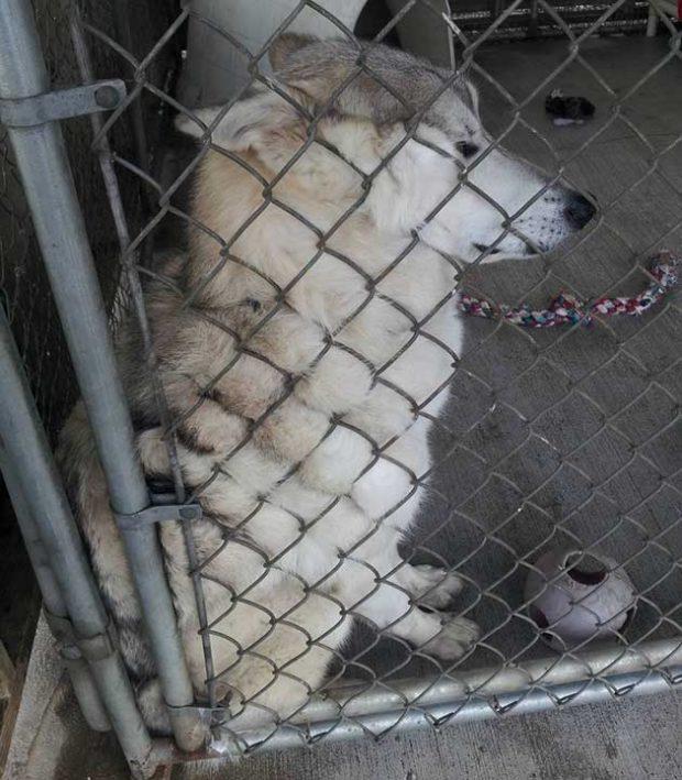 """""""Това куче в приюта се притискаше към оградата, за да мога да стигна до него и да го погаля"""""""
