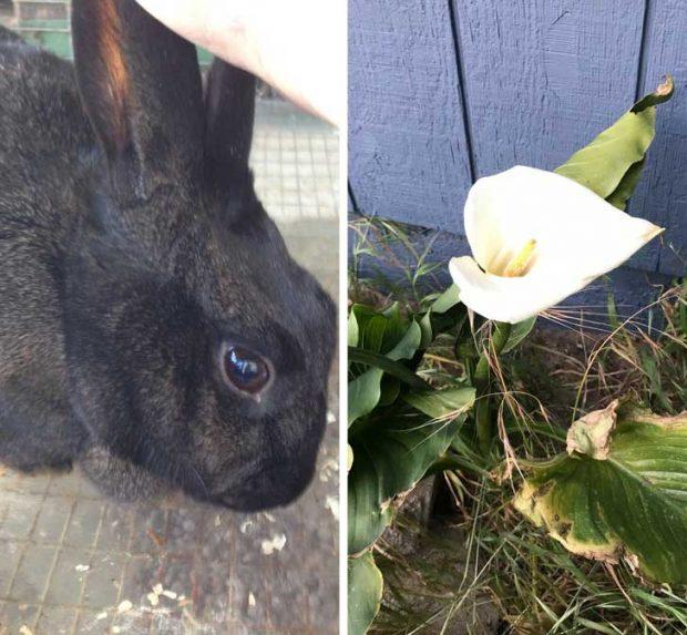 """""""Миналата година, точно на Деня на бащата, почина домашното ми зайче. Тази година на мястото, на което го погребах, порасна лилия"""""""