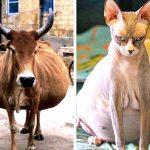 24 снимки на бременни животни, по-сладки от всичко, което ще видиш днес