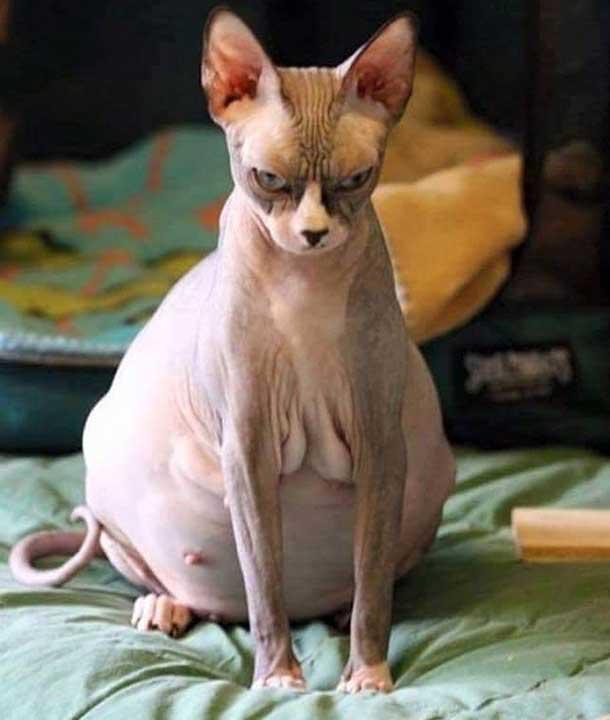 """""""Мисля, че котката ми вече не ме харесва"""""""