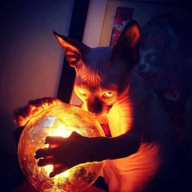 Злият магьосник и неговите пъклени планове