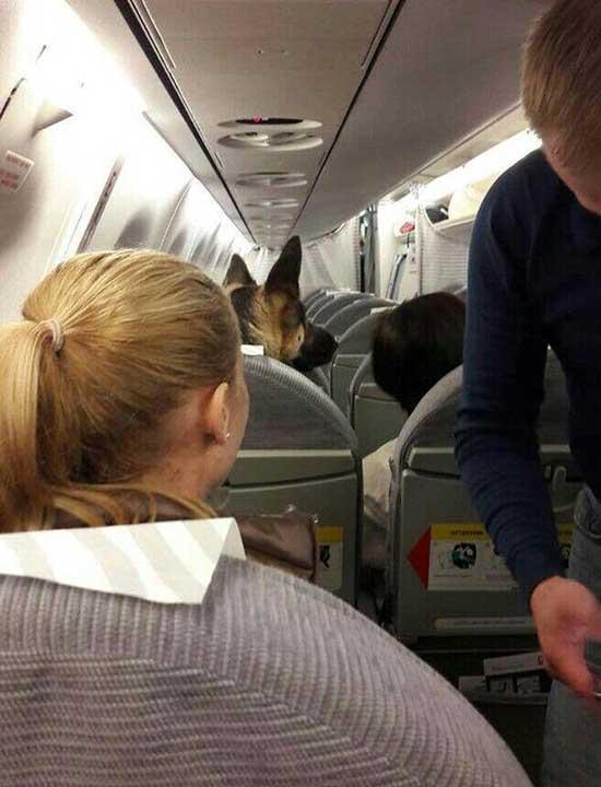 Няма начин да пътуваш с тях
