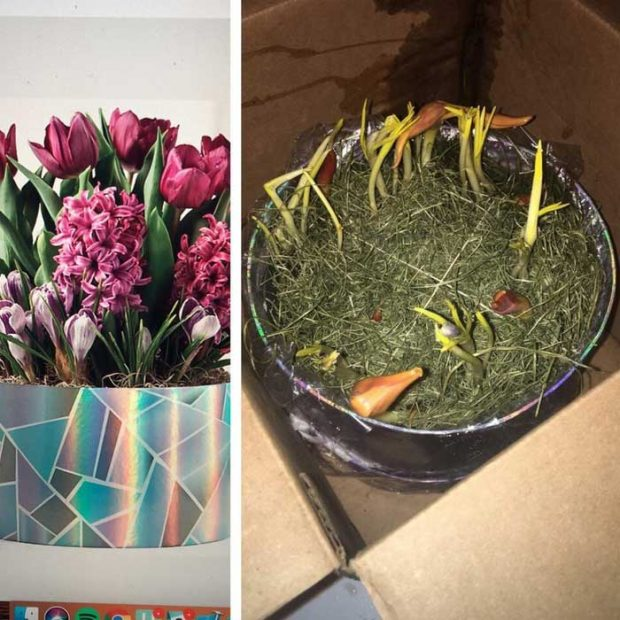 """""""Поръчах си цветя онлайн. Лявата снимка е от сайта, а в дясно е това, което пристигна при мен"""""""
