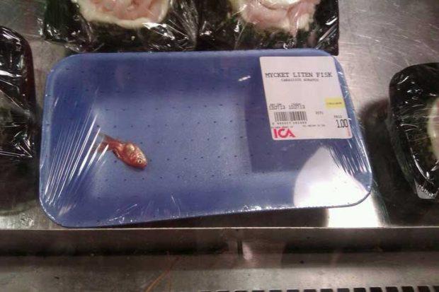 Сигурно тази рибка е много специална