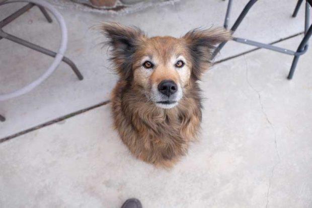 """""""Направих снимка на кучето на родителите ми. Тя изглежда така, сякаш е закачена за стената"""""""