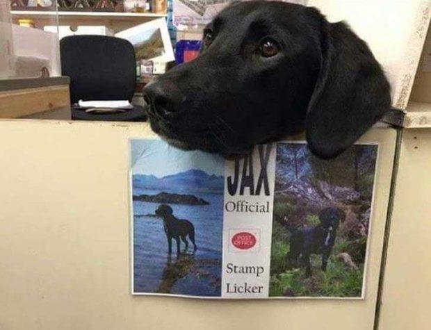 Запознай се с Дакс. Той е официалният близач на марки в пощенския клон на село Портре, Шотландия