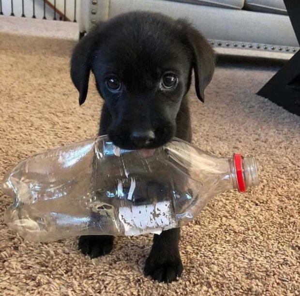 Няма значение колко специални играчки има, пластмасовата бутилка винаги е за предпочитане