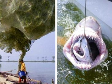 16 удивителни снимки, които изглеждат нереално, но са напълно истински