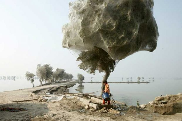 Дърветата са обвити целите в паяжини, след наводнение в провинция Синд, Пакистан
