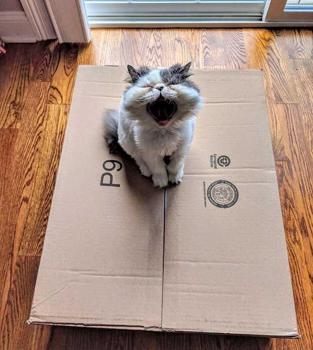 Затворената кутия е болка за всяка една котка