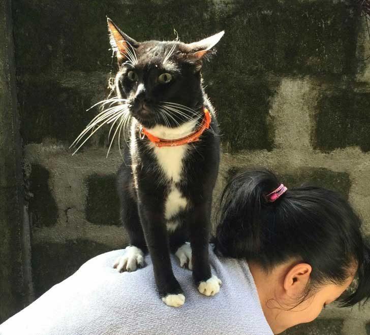 """""""Тази сутрин котката ми се изгуби. Намерих го по-късно под една щайга и когато понечих да го вдигна, той изпадна в паника и се покатери върху мен"""""""