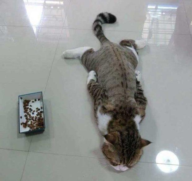 Котешкият живот е толкова изтощителен