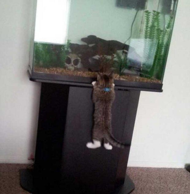Котка, която вярва, че няма невъзможни неща