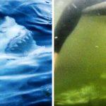 15 зловещи снимки, от които ще те побият тръпки